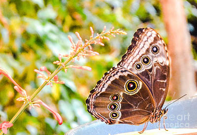 Photograph - Butterfly by Catherine Hill
