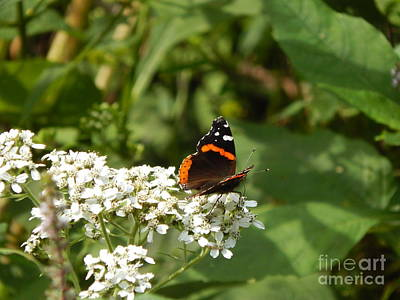 Photograph - Butterfly by Chris Tarpening