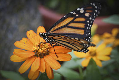 Butterfly Art Print by Christina Durity