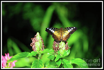 Wall Art - Photograph - Butterfly by Christine Mlynarchuk