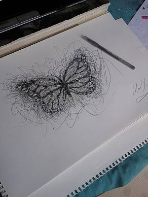 Drawing - Butterfly by Christopher Kyle