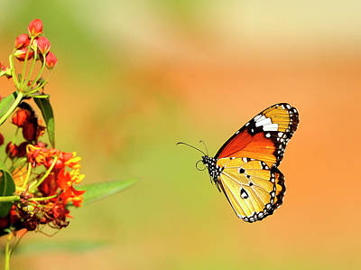 Focus On Foreground Photograph - Butterfly by Chronowizard Gasikara