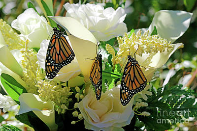 Photograph - Butterfly Church On Earth by Luana K Perez