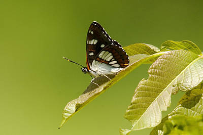 Photograph - Butterfly  by Cliff Norton