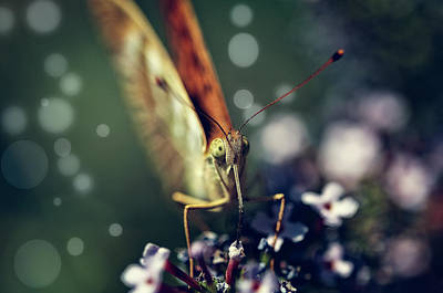 Photograph - Butterfly Close Up by Roberto Pagani