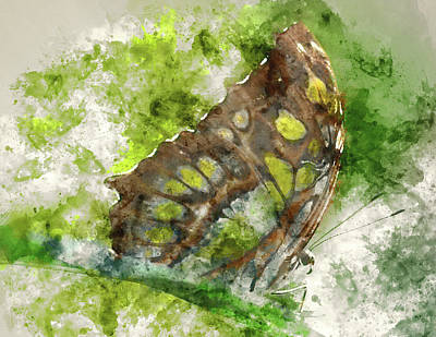 Painting - Butterfly Close Up Digital Watercolor On Photograph by Brandon Bourdages