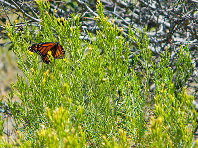 Photograph - Butterfly by Pacific Northwest Imagery