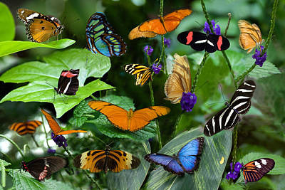 Butterfly Collage Art Print by Cabral Stock