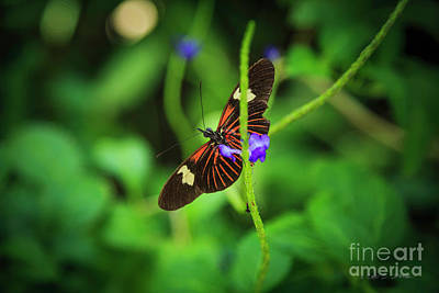 Photograph - Butterfly by Craig J Satterlee