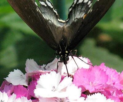 Butterfly Cup Print by Debra     Vatalaro