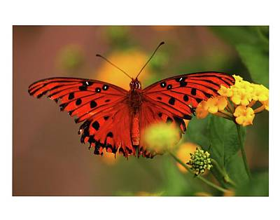 Photograph - Butterfly by Dana Flaherty