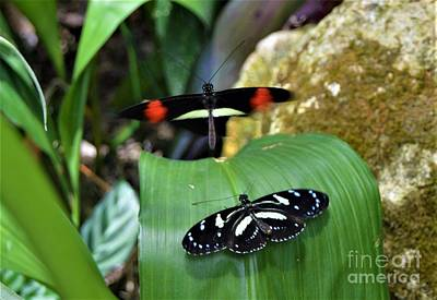 Photograph - Butterfly Dance by Brigitte Emme
