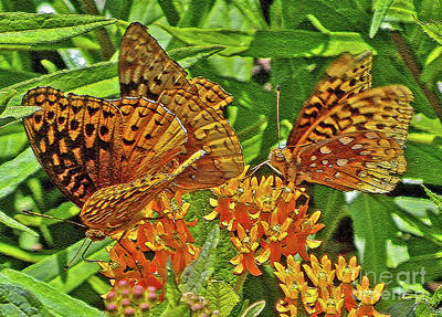 Photograph - Butterfly Delight by Lydia Holly
