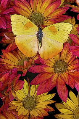 Darrell Gulin Painting - Butterfly Detail by JQ Licensing