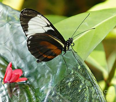 Photograph - Butterfly Dish  by Lilliana Mendez