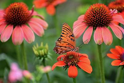 Photograph - Butterfly Dream In The Garden by Lynn Bauer
