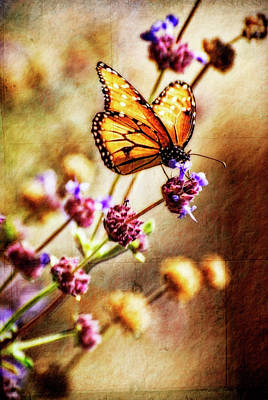 Queen Butterfly Photograph - Butterfly Dreams by Saija  Lehtonen