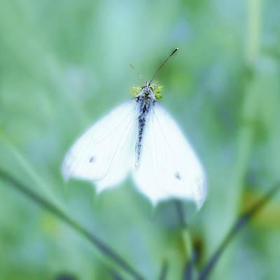 Digital Art - Butterfly Early Morning by Tommytechno Sweden
