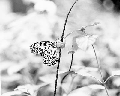 Butterfly Eatting  Art Print