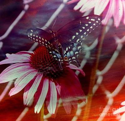 Photograph - Butterfly Effect by Amanda Kessel
