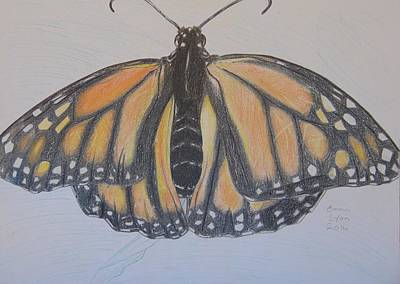 Drawing - Butterfly by Emma Lyon