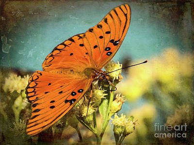 Butterfly Enjoying The Nectar Art Print