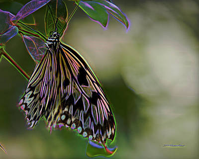Digital Art - Butterfly Fantasy 3a by Walter Herrit