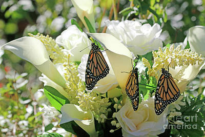 Photograph - Butterfly Florist Photo by Luana K Perez