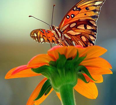 Butterfly Flower Art Print by Dottie Dees