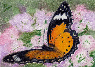 Orange And Black Butterfly Painting - Butterfly Flutter Aceo by Brenda Thour