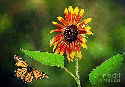 Photograph - Butterfly Flying To Sunflower  by Paul Wilford
