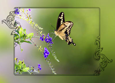 Photograph - Butterfly Framed by Leticia Latocki
