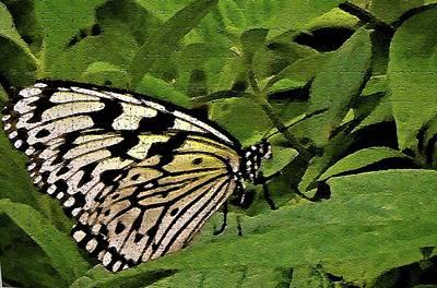 Digital Art - Butterfly Fresco by Mindy Newman