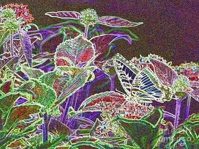 Photograph - Butterfly Garden Fantasy by Barbie Corbett-Newmin