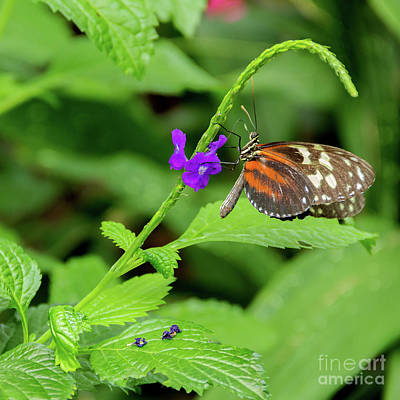 Photograph - Butterfly Garden by Linda Joyce