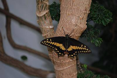 Photograph - Butterfly by Gary Wonning