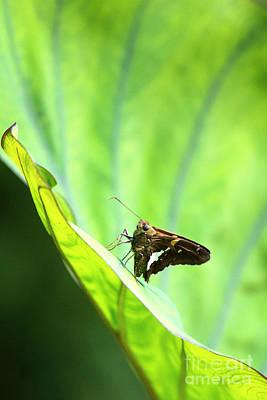 Photograph - Butterfly Gaze by Alycia Christine