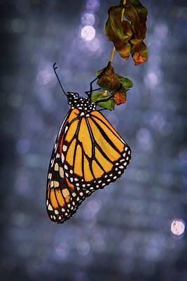 Butterfly Photograph - Butterfly Hanging From Leaf by Garry Gay