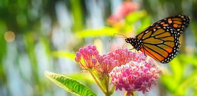 Photograph - Butterfly Harmony by Bernadette Chiaramonte