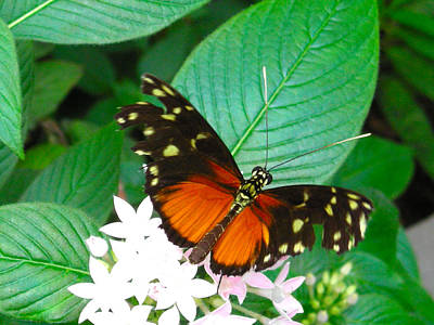 Photograph - Butterfly House  by Brian Hoover