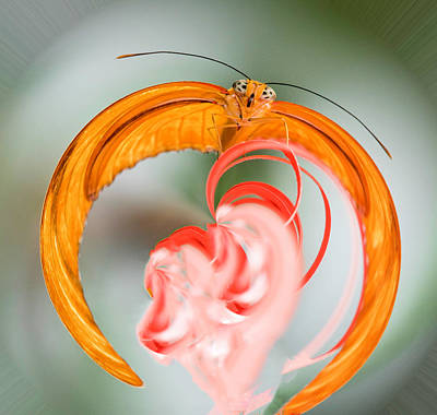 Photograph - Butterfly In Charge by Cathy Donohoue