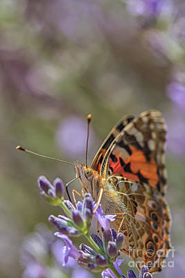 Art Print featuring the photograph Butterfly In Close Up by Patricia Hofmeester