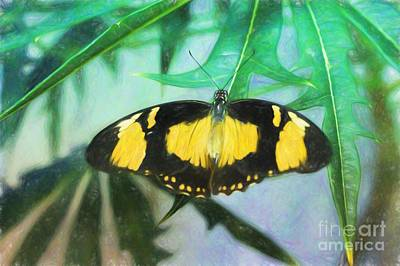Photograph - Butterfly In Colored Pencil by Steven Parker