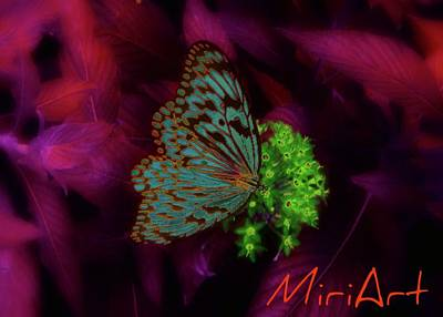 Art Print featuring the photograph Butterfly In Fusia by Miriam Shaw