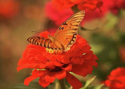 Photograph - Butterfly In Garden by Donna G Smith