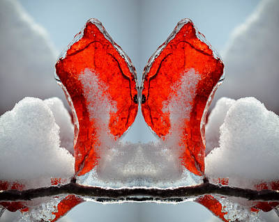 Photograph - Butterfly In Ice by James Barber