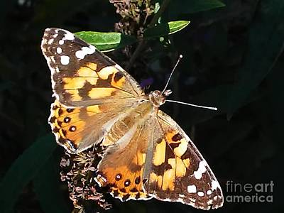 Photograph - Butterfly In Motion by Marlene Williams