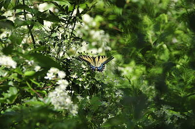 Photograph - Butterfly In Muted Green Background by David Arment