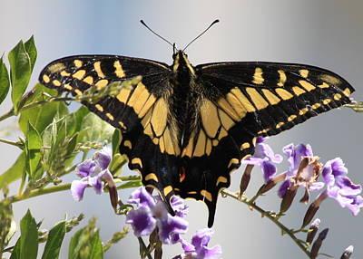 Butterfly On Blue Flower Photograph - Butterfly In My Garden by Carol Groenen