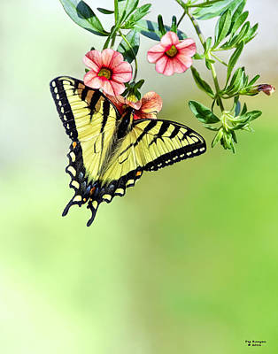 Butterfly In My Garden Art Print